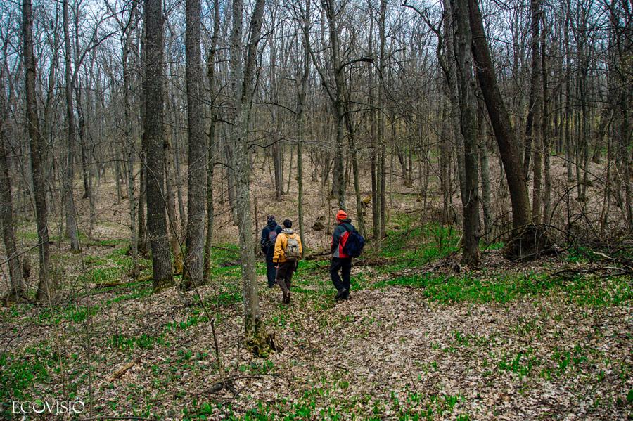 Riscova forest trail