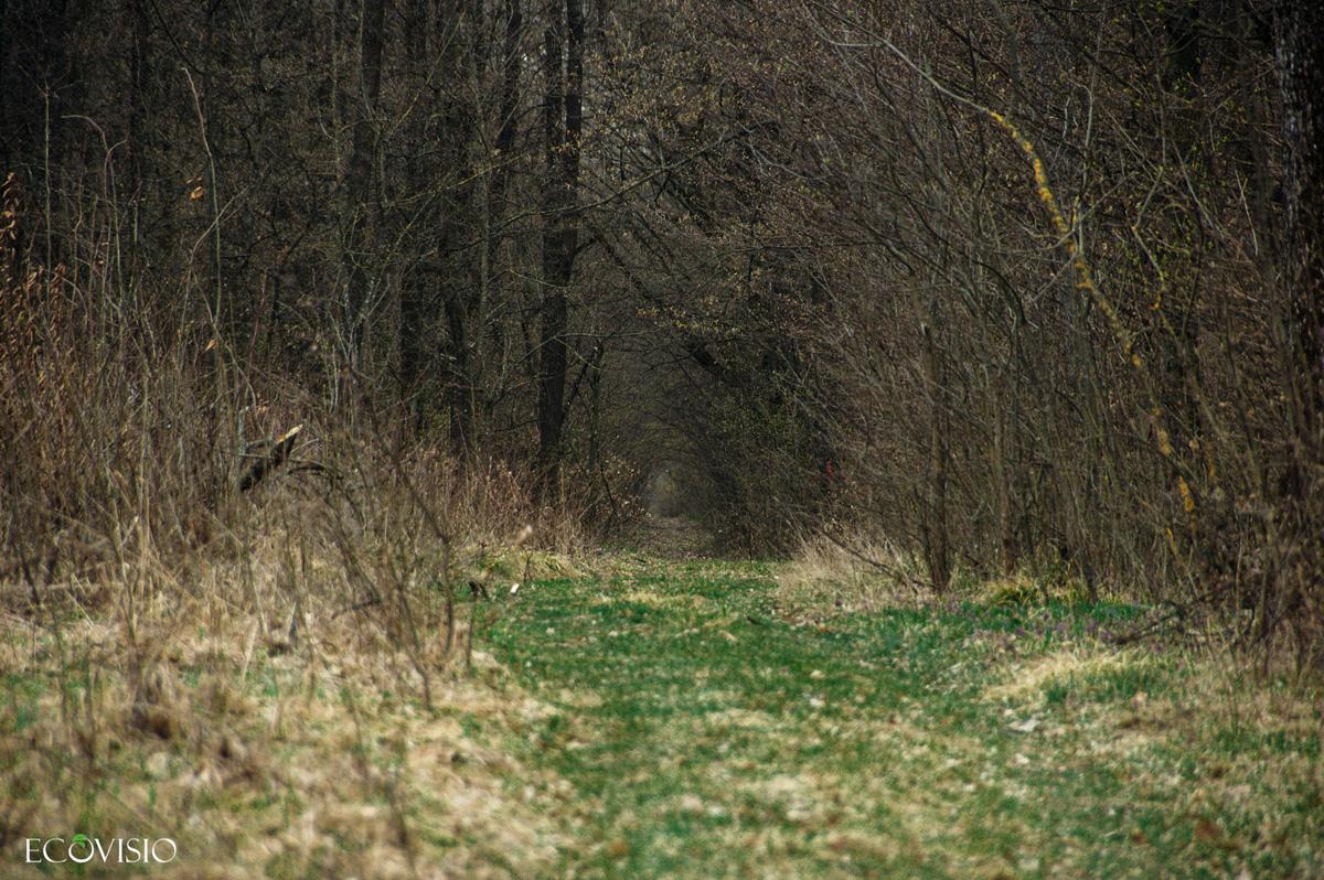 Traseu forestier 4