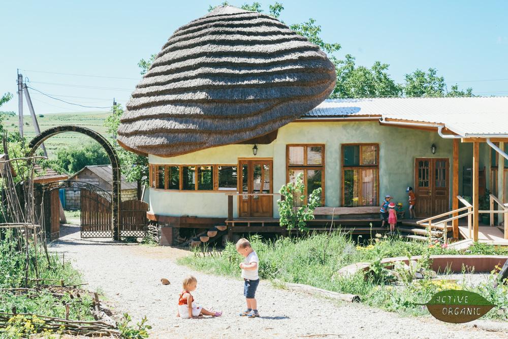 EcoVillage Moldova ciuperca