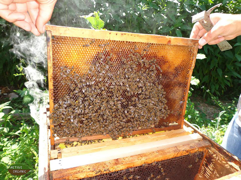 ActiveOrganic Cahul Rosu bees