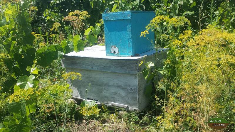 ActiveOrganic Cismichioi bees