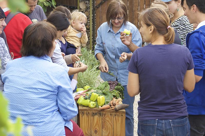 Eco Training Center Organic Gardening Workshop with Goris tomatoes 2